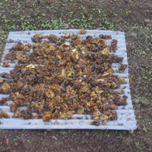 蜂蜜のかす