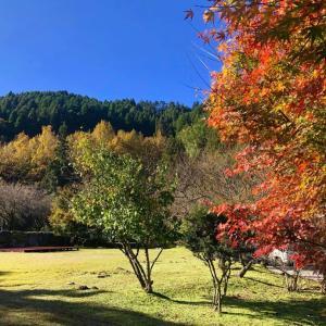 美味しい…秋