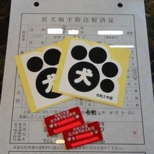 蘭丸と茶々丸の狂犬病予防接種