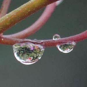 雨の中 庭の花