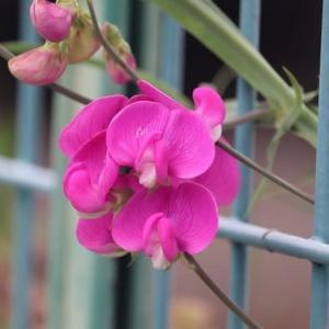 この花な~に? 初めて見る花