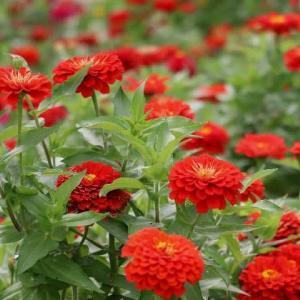 夏と秋が混在する花壇