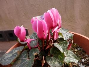 花の香り★花粉の季節