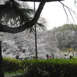 桜の下を通らないコースのお散歩その1