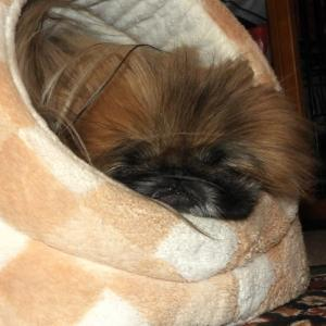 眠っている時はまん丸なぺったんこ、起きている時はボサボサのぺったんこ。なあに?