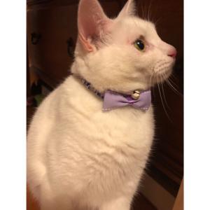 リバティで作る猫のシュシュ首輪