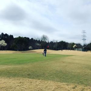 練習もせずに久しぶりのゴルフ 〜 近所の桜