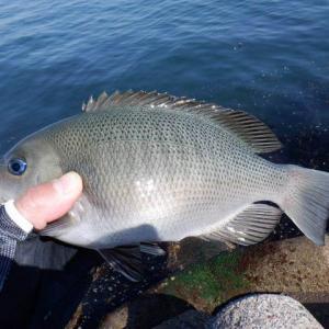 東二見人工島のコッパ釣り(2021.5.30)