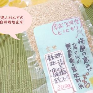 桜島ふれんずの自然栽培玄米  ご飯が苦手な私が塩だけでおいしく食べれたもっちり、甘みが広がる玄米