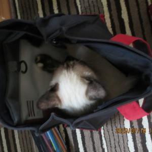 Cat / 自分から入ってたんだね'(笑)、この時