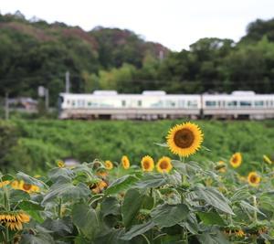 奈良県ぶらり