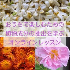 植物成分を抽出するためのオンラインレッスン