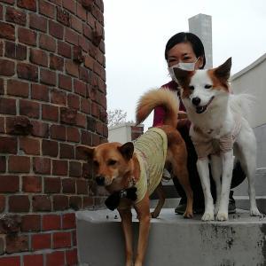 犬散歩in姫路手柄山公園