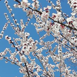 【簡単】いつも鼻呼吸を意識する「鼻瞑想」~感染予防ほか、美しく健やかな心身のためにも♪~