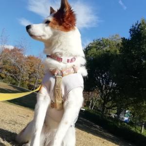 【犬散歩】師走の三木山森林公園