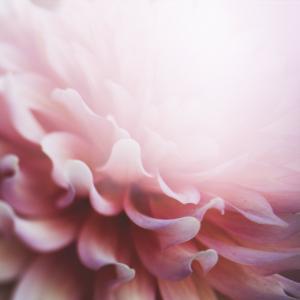 光は愛☆慈悲の心を育み広げる瞑想