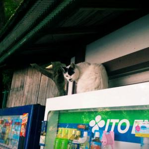 路地の猫たち