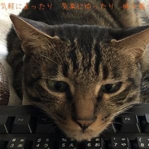 2020.6.21 時々猫