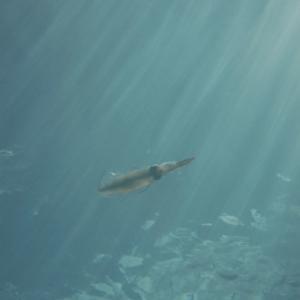 10月21日 北部ビーチ体験ダイビング~あげいん編〜