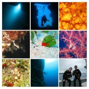 11月19日 水納島体験ダイビング