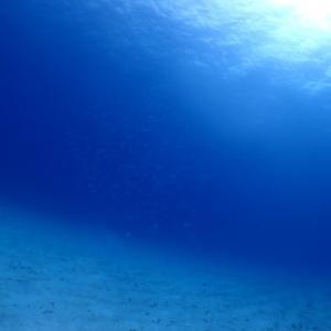 5月4日 水納島&瀬底島ファンダイビング