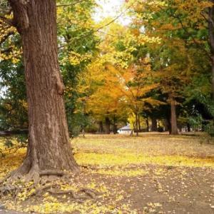紅葉の上野公園を歩いた… 2020
