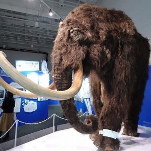 福岡市科学展のマンモス展 実に何万年前の生物が展示されとる!