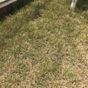 芝生の手入れ2020 5月 再起を誓う!