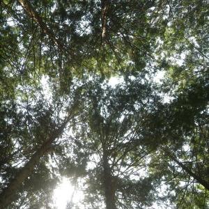 きらめ樹、東京上陸!