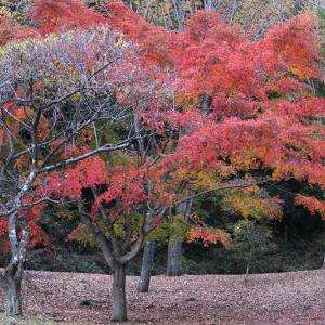 佐野市梅林公園の紅葉