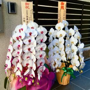 綺麗な胡蝶蘭をありがとうございました
