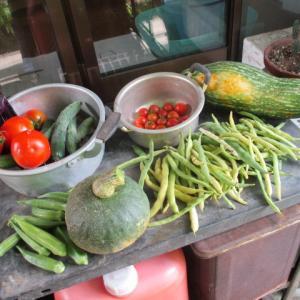 今年も少量多品種栽培実行中