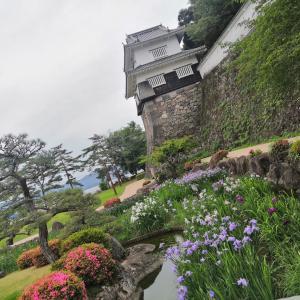 大村公園の花菖蒲を見に行く!