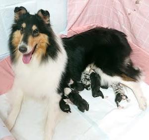 レイちゃん 出産しました