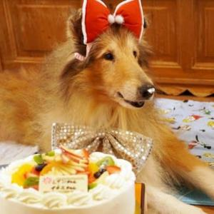 レイン 12歳のお誕生会