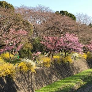 ☆昭和記念公園