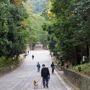 中国・山陰方面への旅 〜2019 秋〜 その5。