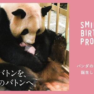 パンダの赤ちゃんの名前