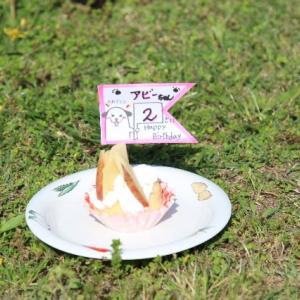 アビーちゃん・ひめちゃんお誕生日