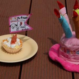 龍都君・クッキーちゃんお誕生日とお願い