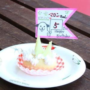 マロンちゃんお誕生日と新会員様・秋の営業時間