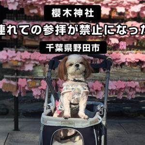 【櫻木神社】ペットを連れての参拝が禁止になったようです<千葉県野田市>