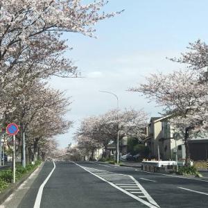 ★☆ 桜のトンネルをくぐり抜け ★☆