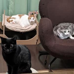 10月の猫たち