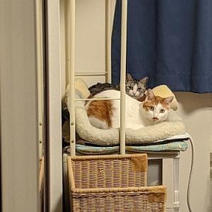 4月の我が家の猫たち