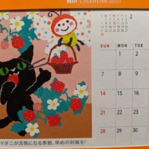 3月の猫たち