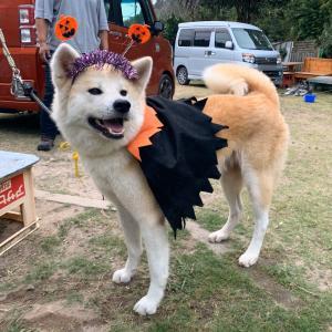 ハロウィン仮装させられた優姫