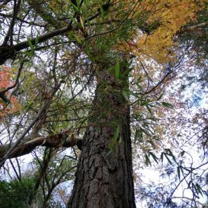 木々…大きくなった