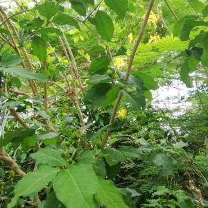 南国植物ほか