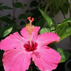 今日の植物